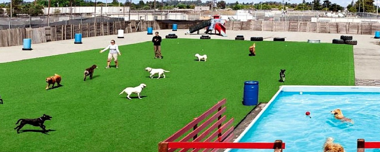pet-playground