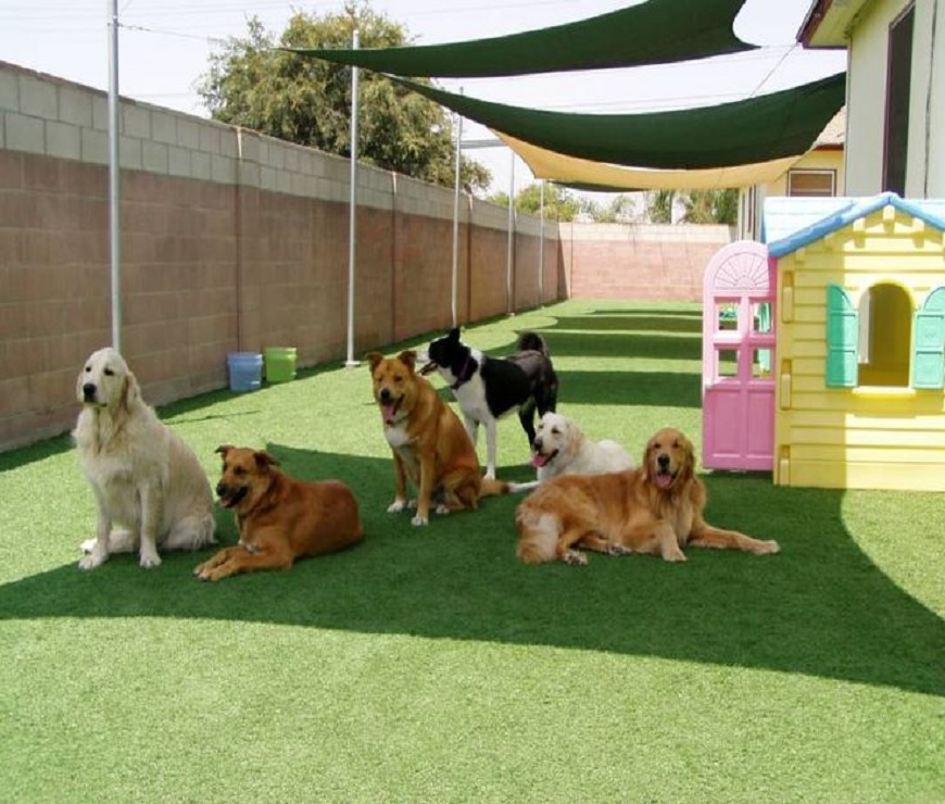 Pet Turf Playground Installation